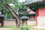 'Punggyeong' Family Summer+Autumn