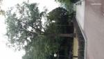 손기정 공원(올림픽  월계수)