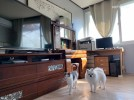 공용실에 고양이(레오)와 강아지(구찌)도 함께 ..