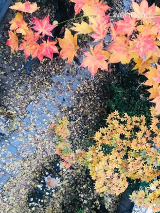 나루의 가을날 정원뷰입니다.