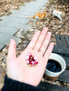 살구나무 꽃봉오리 입니다.