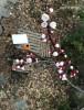 2층에서 바라본 마당과 살구나무 꽃봉오리입니다.