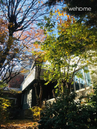 가을날 정원뷰, 단풍나무가 있어요.