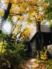 가을날 단풍이 짙어가는 나루의 정원