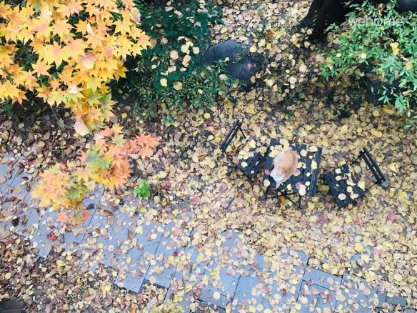 가을날 정원