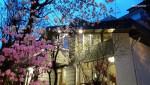 어느 봄날 저녁 진달래가 핀 정원